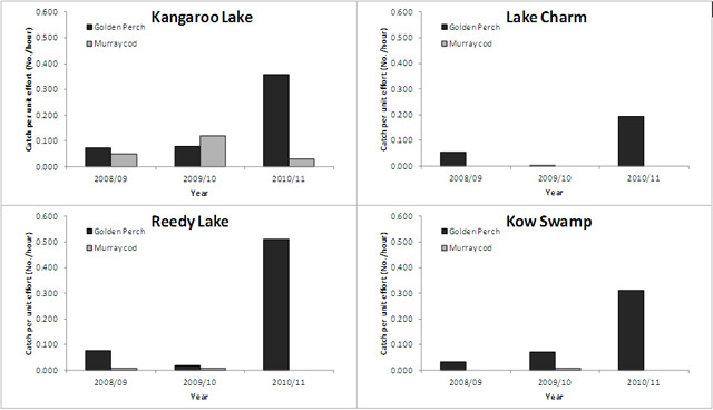 """Figure 2. Catch rates (number caught / hour) of golden perch and Murray cod from Kangaroo Lake, Lake Charm, Reedy Lake, and Kow Swamp."""
