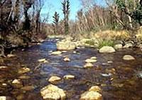 Upper Mitta Mitta River