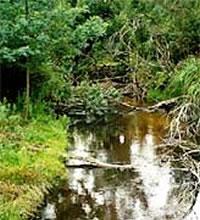 Bunyip River