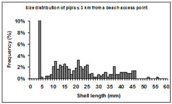 This graph shows the size frequency of shell lengths sampled at transects 3km or less from a beach access point. The frequency ranges from 0% to 10% and the shell length ranges from 0 to 60mm