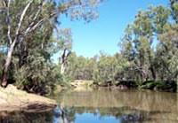 Ovens River, Peechelba