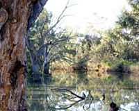 Wallpolla Creek