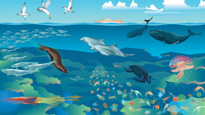 Illustration of the Open Water and the species that live there