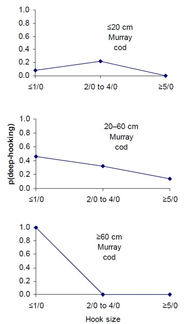 Figure 11. The probability of Murray cod being deep-hooked, for fish caught using single hook (n=269 fish of known length), with respect to three fish length-classes and three hook size-classes
