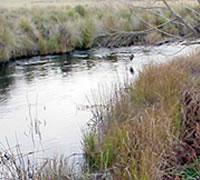 Delegate River