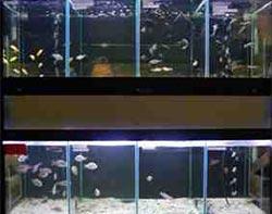Tropical freshwater fish aquaria