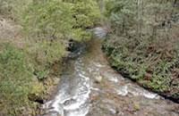 Gaffneys Creek