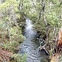 Taponga River