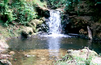 Curdies Creek Waterfall