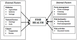 Fish Health Diagram Showing:External Factors - Pollution( Agriculture, Industry, Sewage), Natural Factors(Geology,Soils), Climate(Temperature,Storms). Internal Factors - Farm Management (Water exchange, cleaning, Maintenance), Fish Husbandry(Stocking Density, Feed Management), Fish Activities(Excreted Wastes).