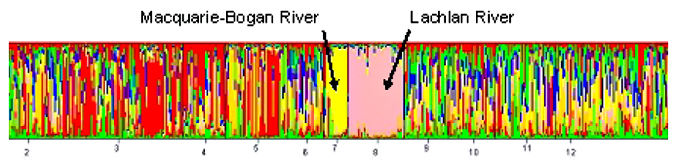 Coloured Graph showing large area of colour for Macquarie-Bogon River and Lachlan River
