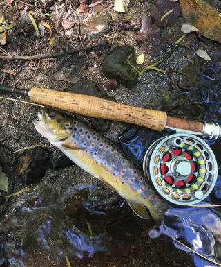 Trout fishing tips and tricks - VFA