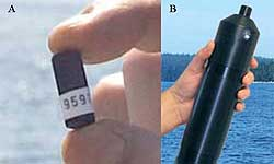 Fig 3. (A) V8SC acoustic transmitter and (B) VR2 acoustic receiver