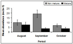 """This graph shows the mean SE transect abundance of immature and mature pipis across sampling period. Mature: August - 10, September - 20, October - 6. Non mature: August - 7, September - 4, October - 4"""