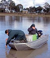 Murray cod research at Lake Charlegrark