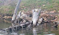 Fig 2. A large woody debris structure attached to the bank of the Tambo River.