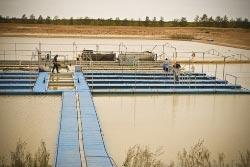 Photograph of Cage culture in Irrigation dams in Mildura