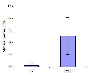 Figure 3 Comparison of the mean distance travelled per minute by estuary perch between night and day. Error bars are standard deviation (n= 11 observations from 2 fish over 11 tracking sessions)