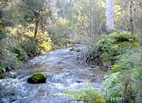 Little Snowy Creek