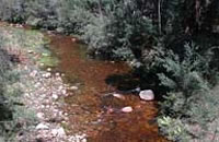 Fyans Creek above Lake Bellfield