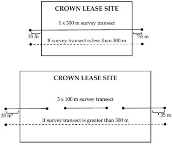 Schematic of Crown lease site indicating approximate placement of the survey transect in relation to the size of the Crown lease site (diagram not to scale).