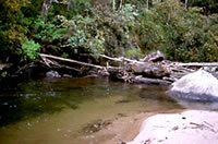 West Kiewa River