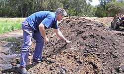 Fig 1. Compost windrow at a trout farm in the Goulburn Valley.
