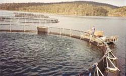 Cage unit in Tasmania