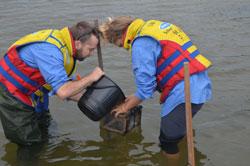 Two men stocking Eastern King Prawns into Lake Tyers