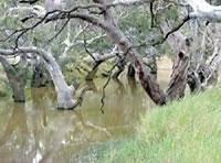 Avoca River