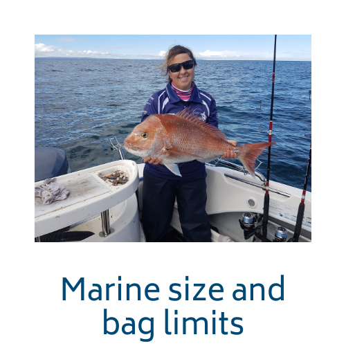 Marine size and bag limits link