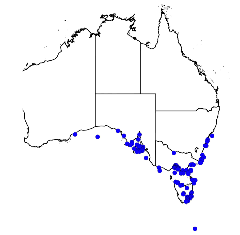 Map showing where giant spider crabs can be located across Australia